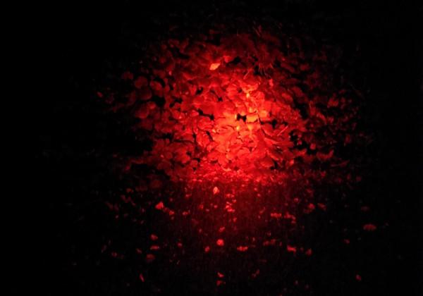 Maxx 5 - Filterglas Rot